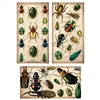 Specimen Beetles Large Matchbox Asst 24Pk