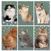 Precious Cat Mini Matchbox Asst 60Pk