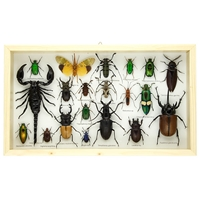 Beetles and Bugs Collection in Frame