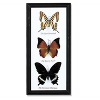 Butterfly Specimens Frame 3Pc Cotton Mounted