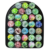 Succulent Dome Magnet Display