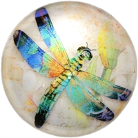 Dragonfly Glass Dome Paperweight