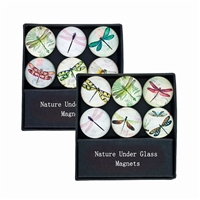 Glass Dragonfly Magnets Gift Set