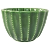 Barrel Cactus Cup Medium